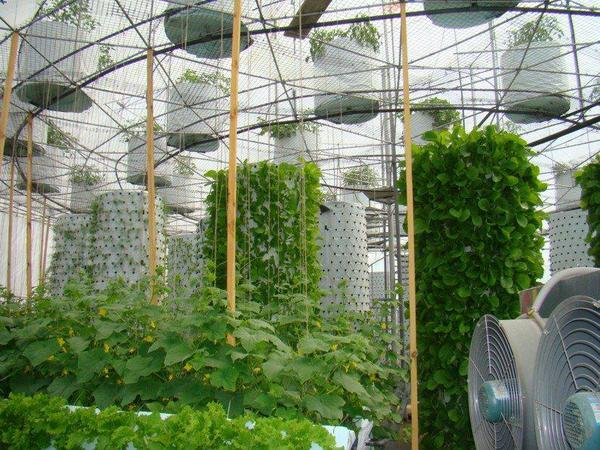 Geodesic Solar Domes for Aeroponics, Aquaponic & Hydroponic system